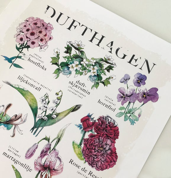 """Image of """"Dufthagen"""""""