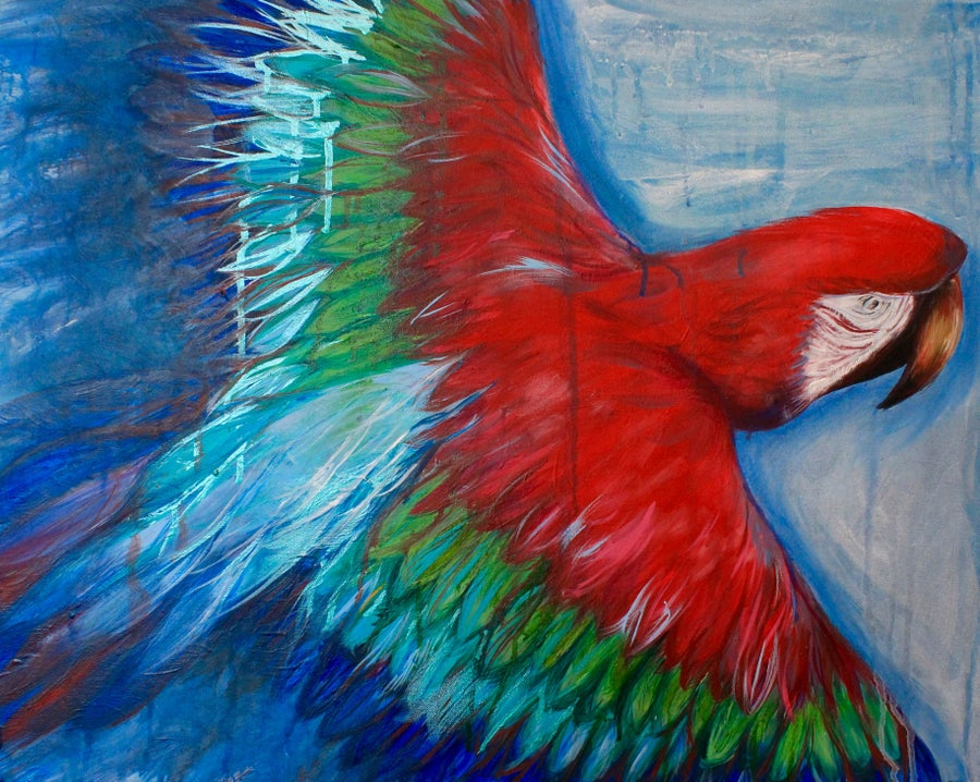 Image of Macaw