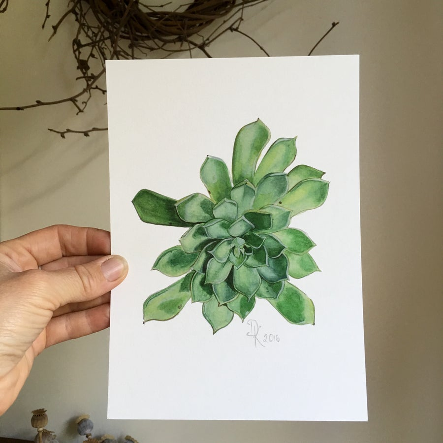 Image of Juniper Echeveria 2016, Fine Art Print
