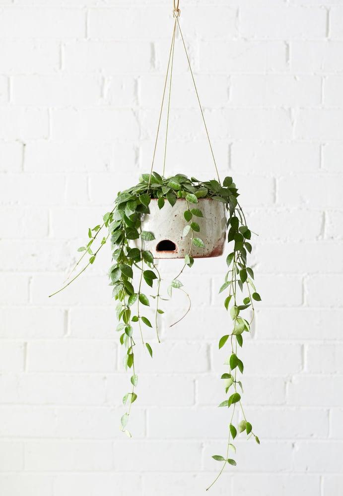 Image of Self-watering Series