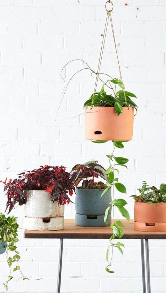Image of Self-watering Series
