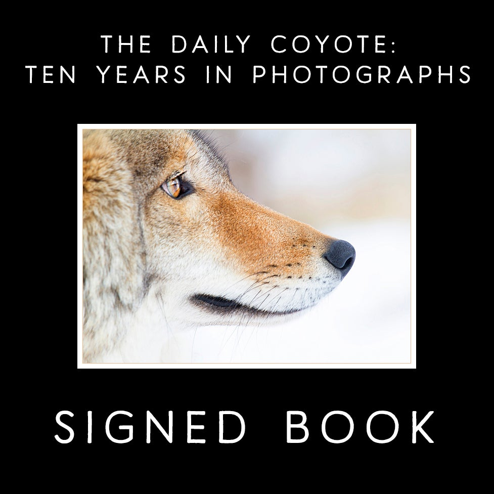 Image of SIGNED & PERSONALIZED ~ The Daily Coyote: Ten Years In Photographs {PRE-ORDER}
