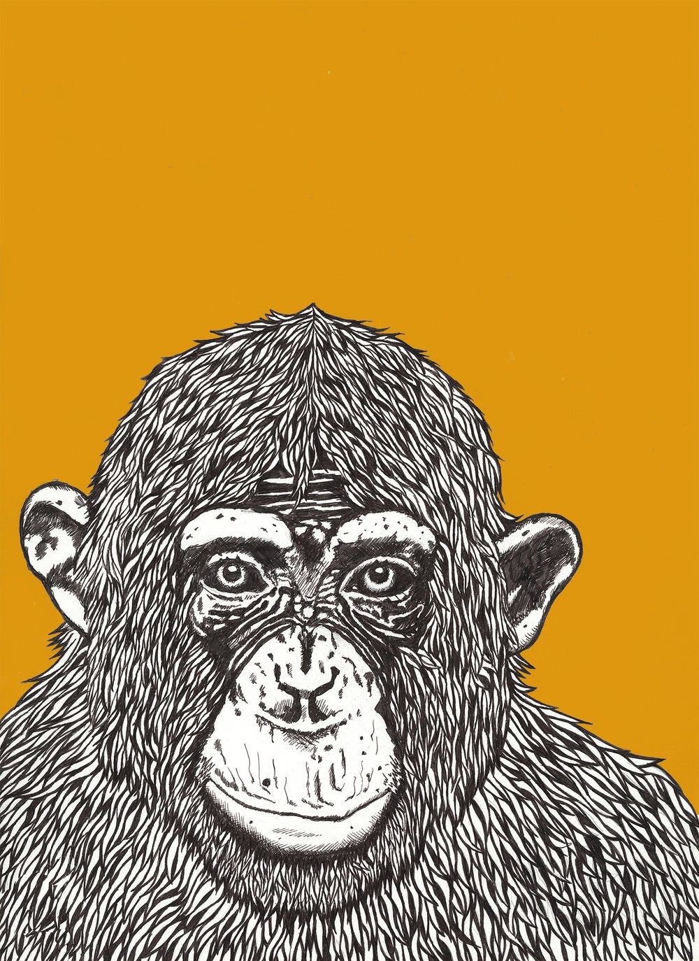 'chimp peace'