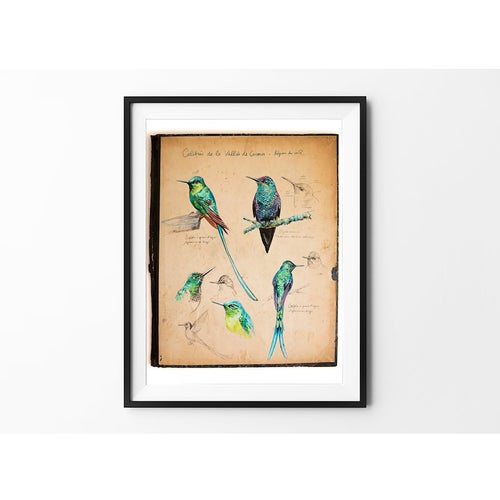 "Image of Paper Art Print - ""Colibris"""