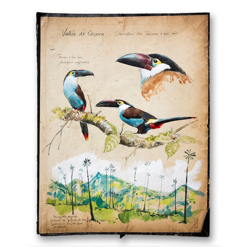 "Image of Paper Art Print - ""Toucans"""