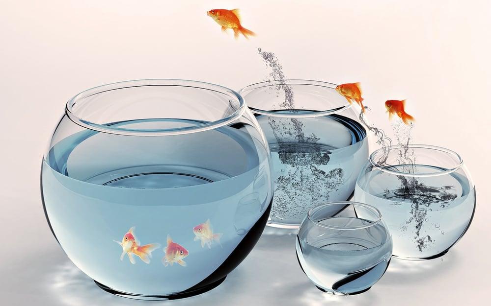 Image of Aquarium Desktop Download Full Version
