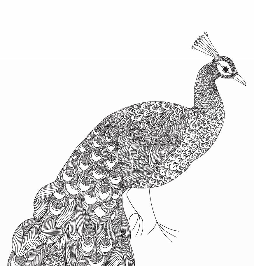 Image of Large Print: Flowery Peacock