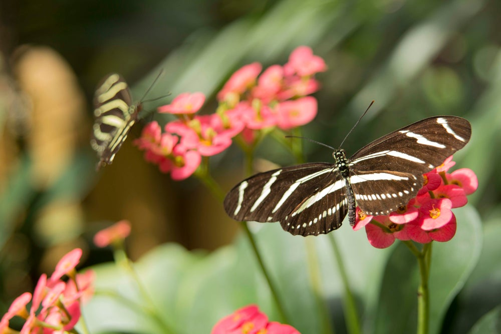 Image of Beautiful Butterfly Images Free Download