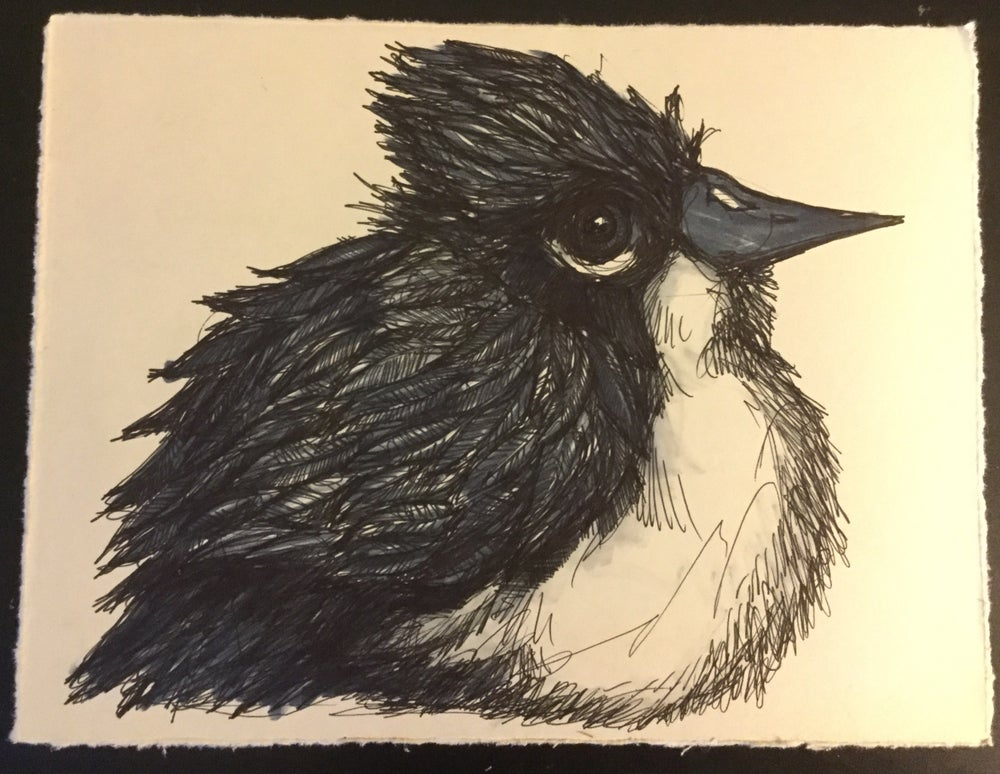 Image of King Bird Drawing #4