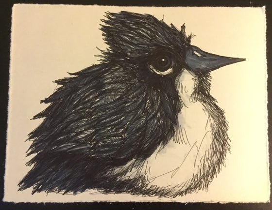 Image of King Bird Drawing #4