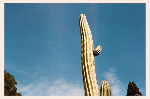 Image of cactus tip