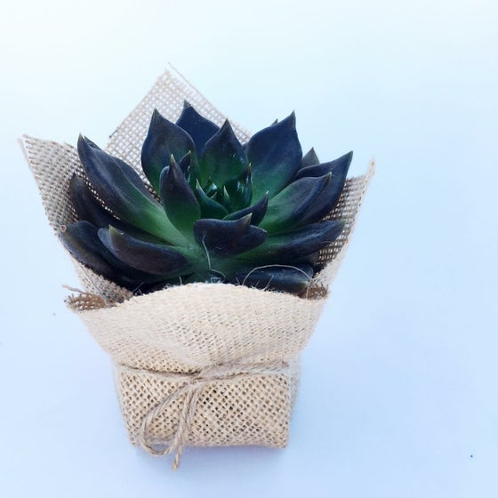 Image of Succulent Favour