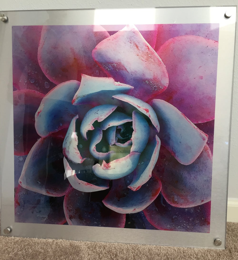 "Image of Pink and Blue Succulent   23"" x 23"""