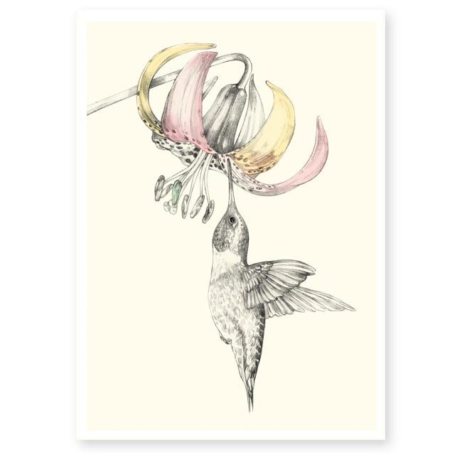 Image of Affiche A4 Colibri