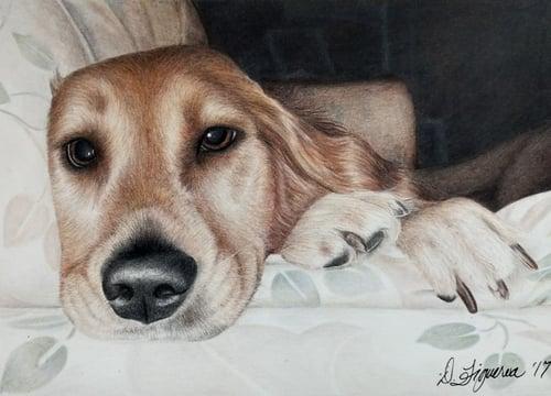 Image of Pet Portraits