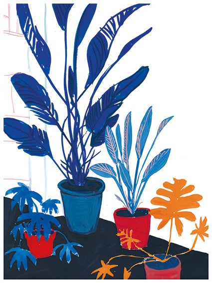 Image of Blue plants red pots