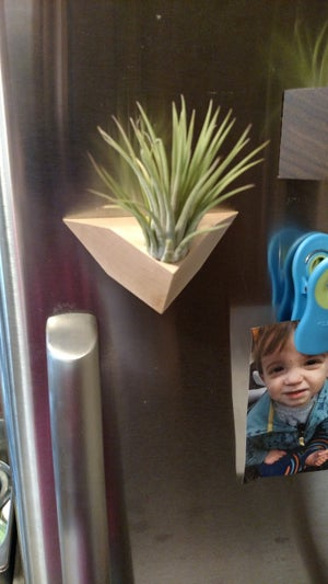 Image of Chevron Air Plant Magnet