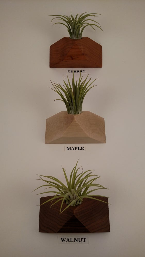 Image of Pyramidal2 Air Plant Magnet