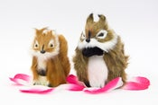 Image of Squirrel Pets - Small & Med