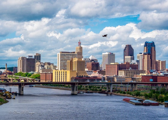 Image of Bald Eagle over Saint Paul
