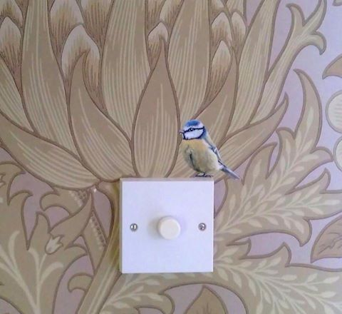 Image of Bertie Blue Tit ~ Wall decal