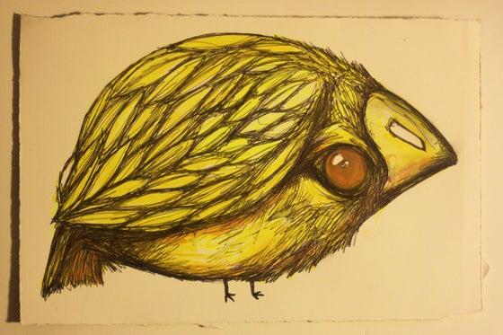 Image of Yellow Fat Bird Drawing