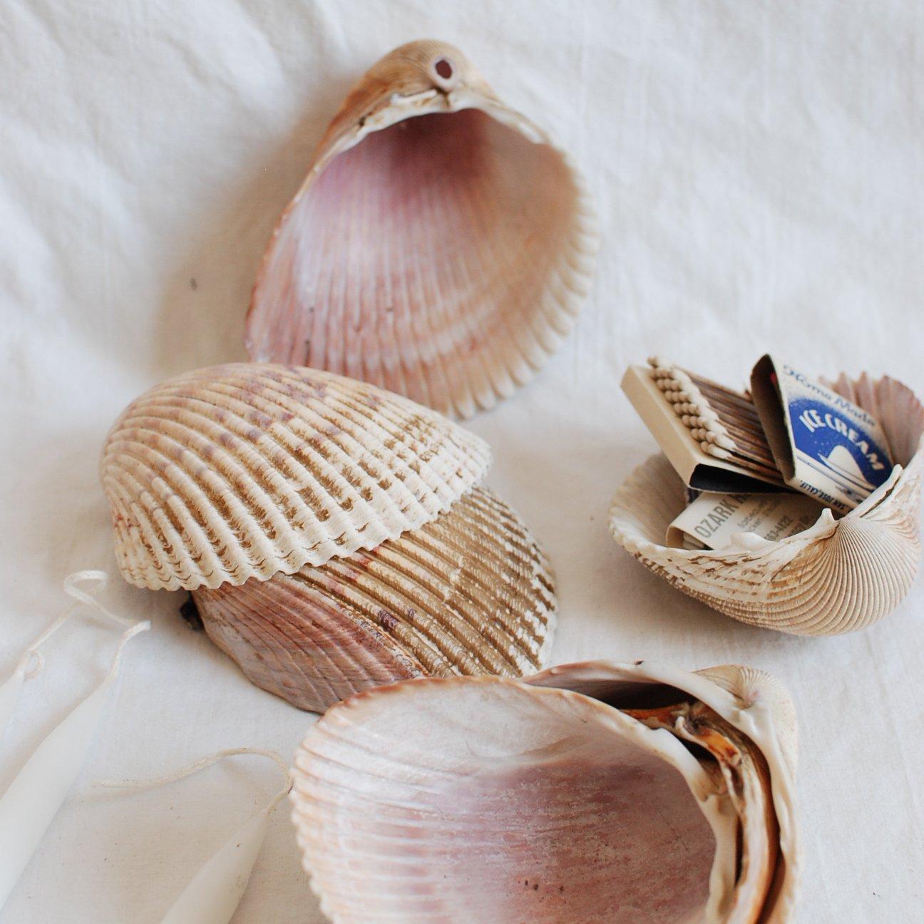 seven sea shells
