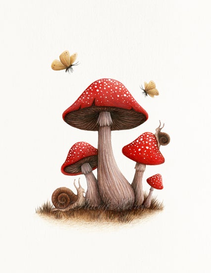 Image of Toadstools / Art Print