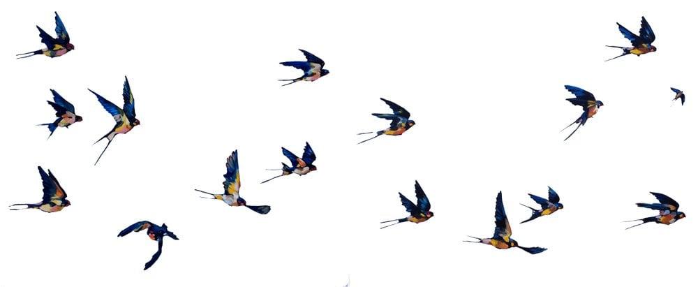 Image of Flying Birds II