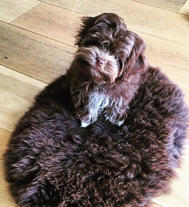 Image of W&W Hebridean chocolate oval seat pad or small pet bed.