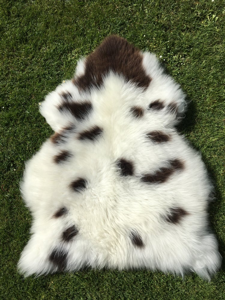 Image of W&W Jacob (cream with chocolate spots)