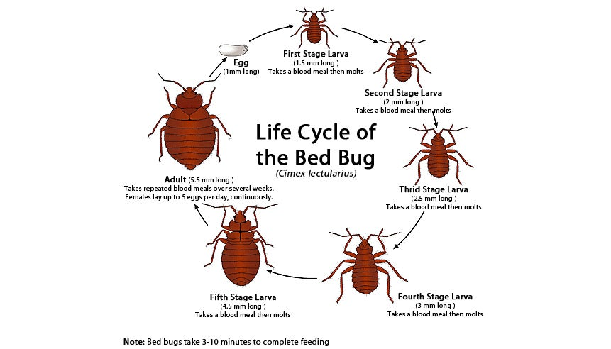 Image of bed bug removal near me