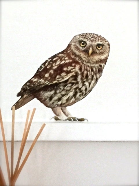 Image of Oswald Little Owl ~ Wall decal