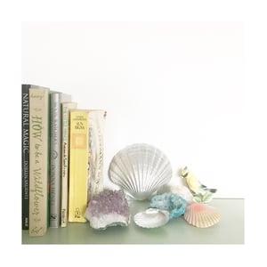 Image of Spirit Shells - Tropical Tones