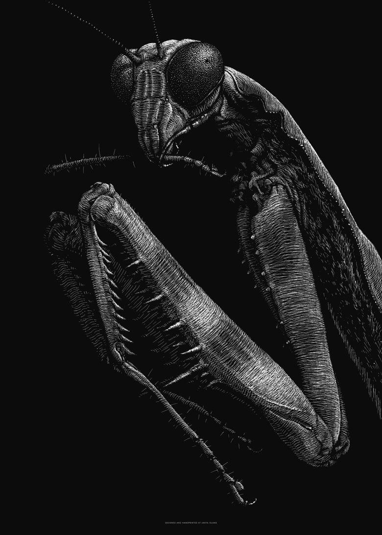 Image of »Mantis« Artprint