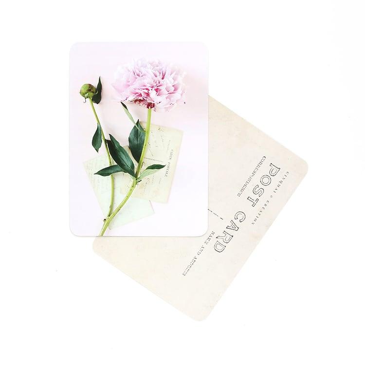 Image of Carte Postale PIVOINE / ROSE