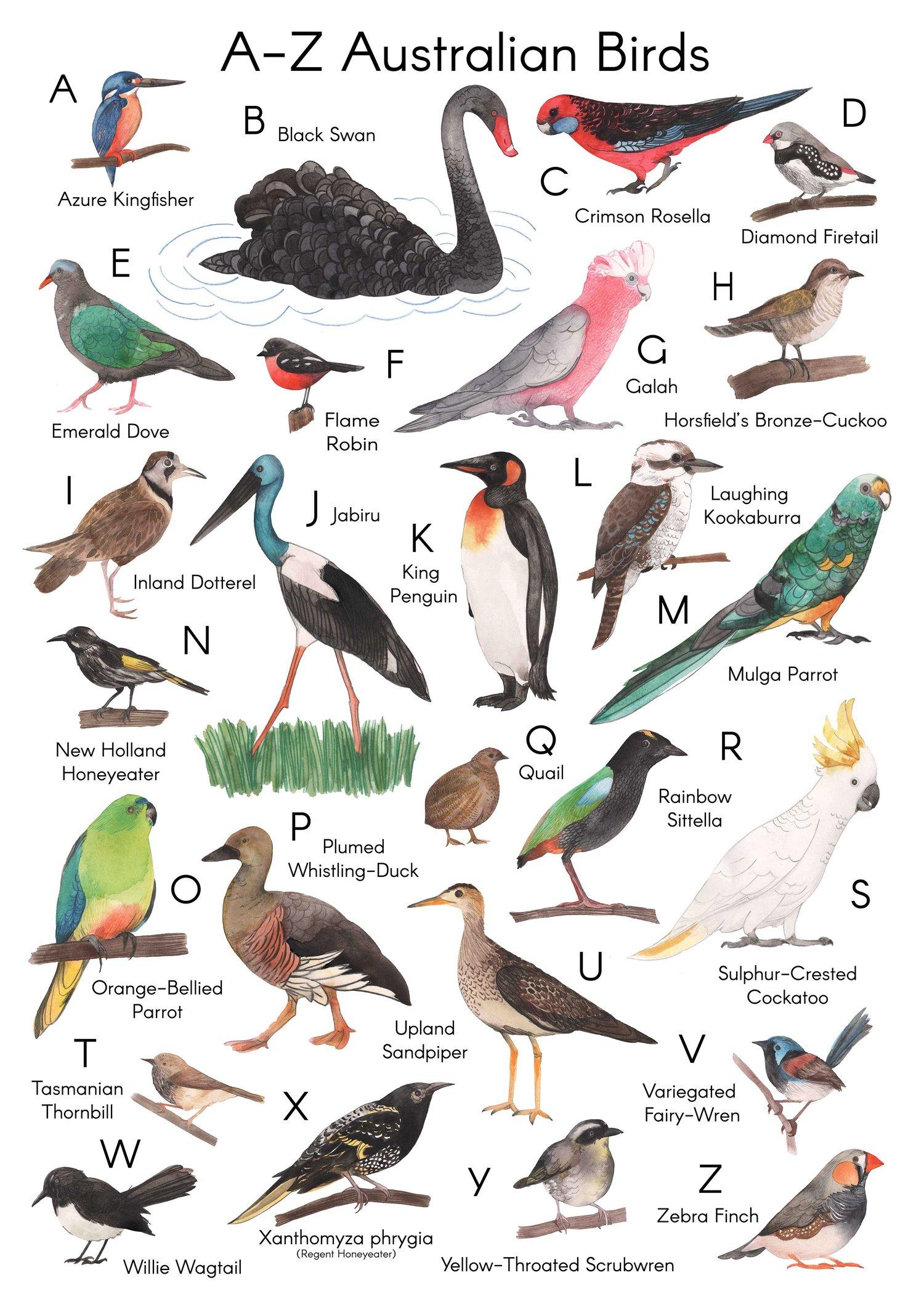 Image of A-Z Australian Birds