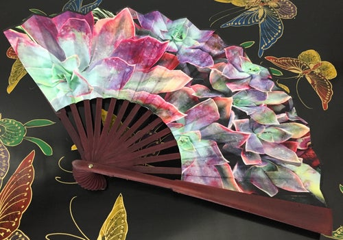 Image of Echeveria Succulents Folding Fan