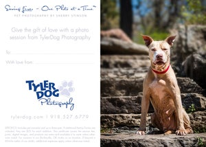 Image of The Golden Bone Pet Photography Gift Certificate