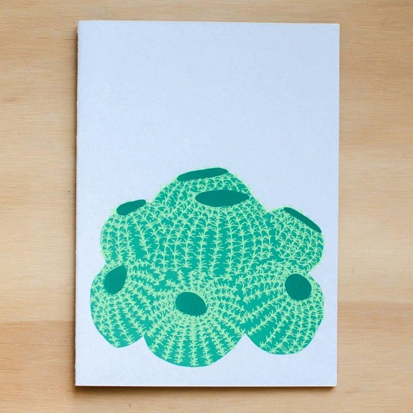 Image of Barrel Cactus