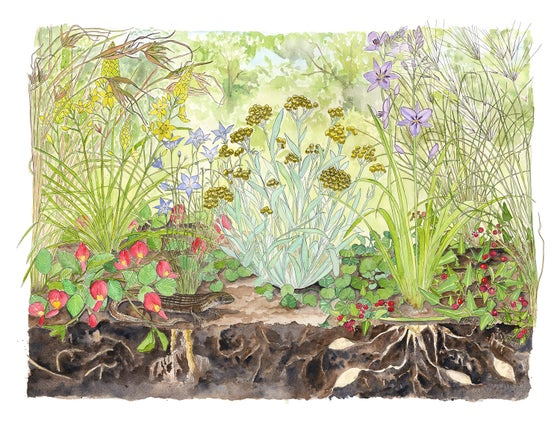 Image of Snakegrass - Limited Edition giclee Print