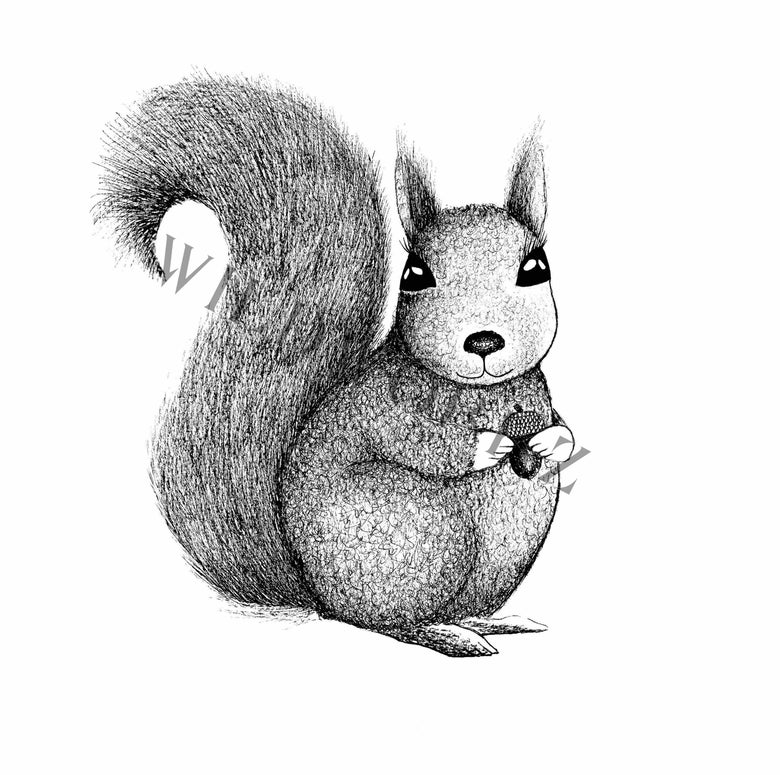 Image of Squirrel
