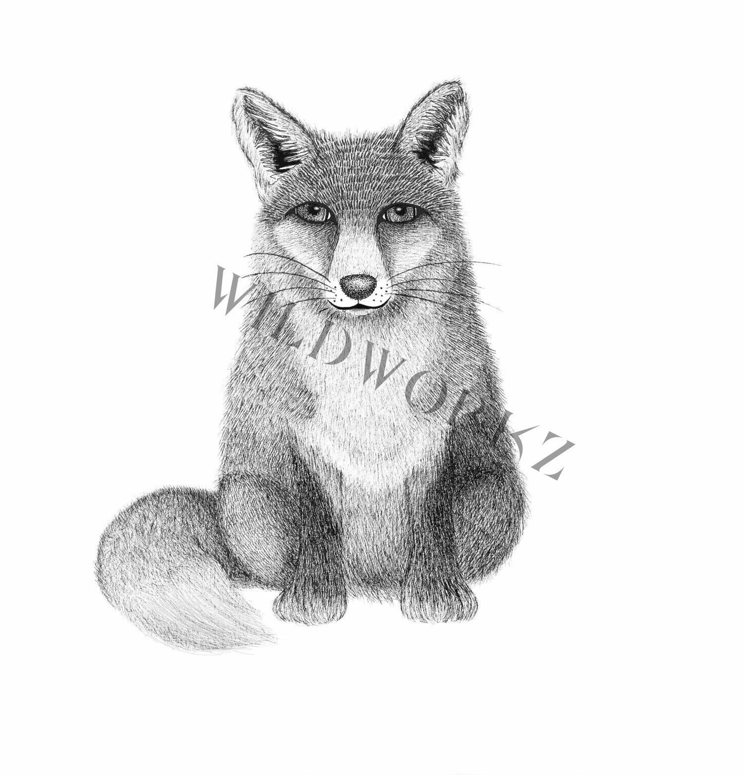 Image of Male Fox