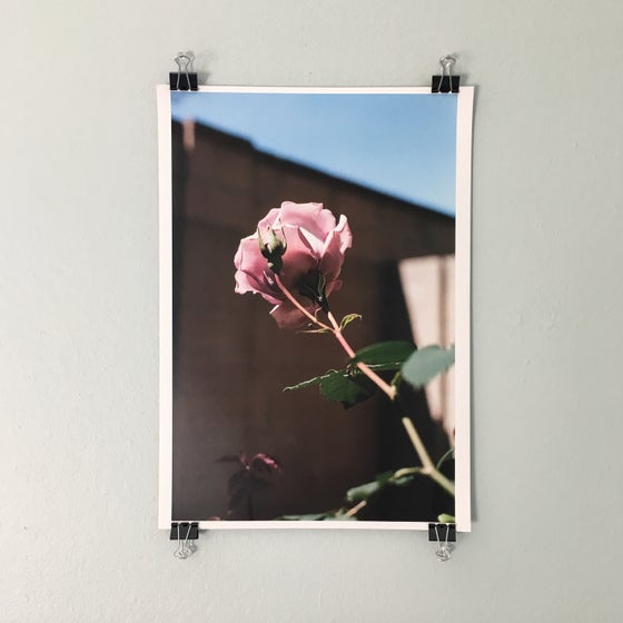 Image of A3 Rose Print