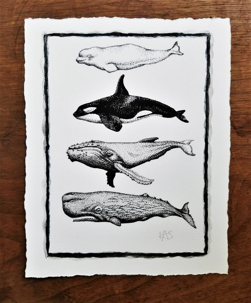 Image of Whales - signed print