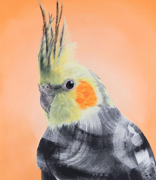 Image of Cockatiel
