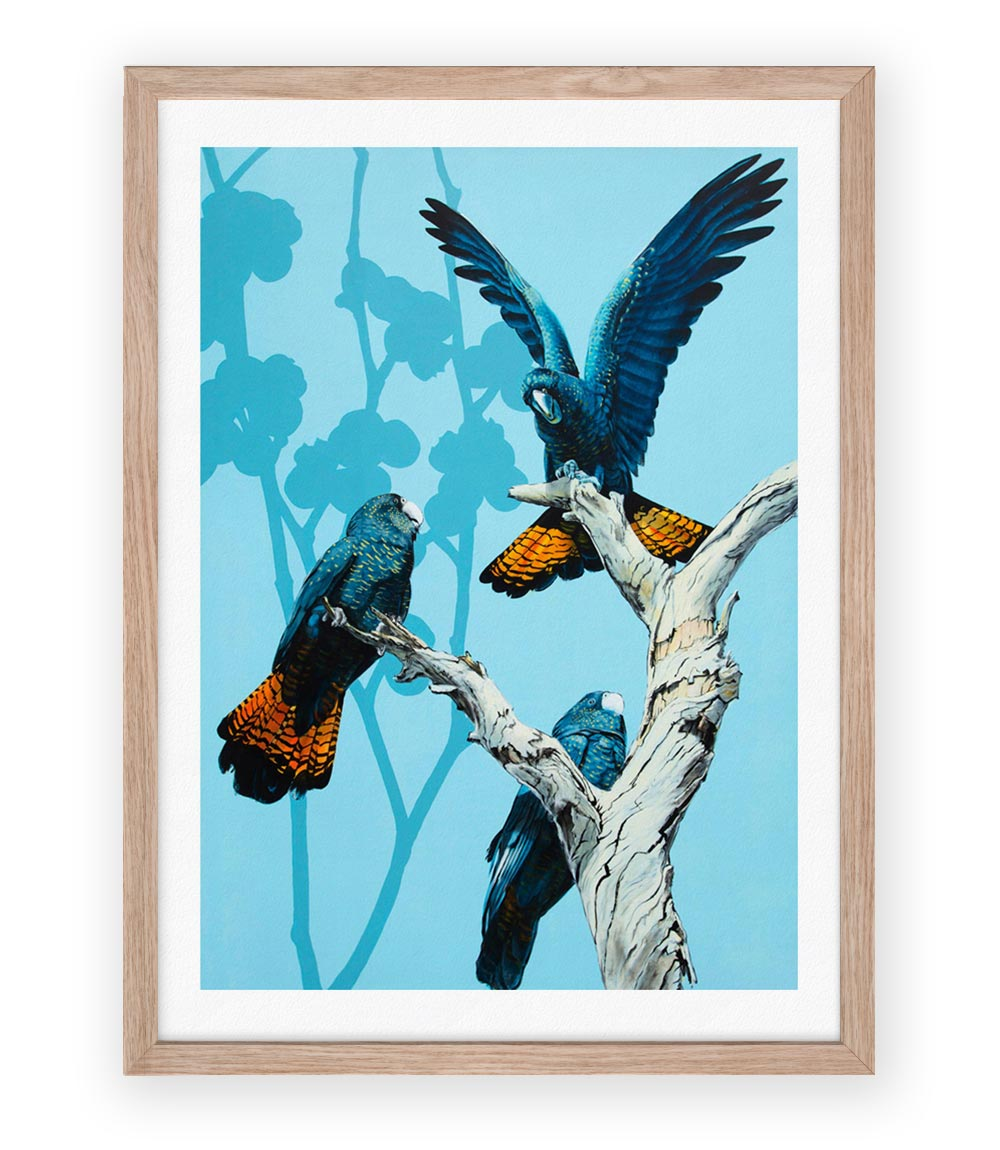 Image of Black Cockatoos Print
