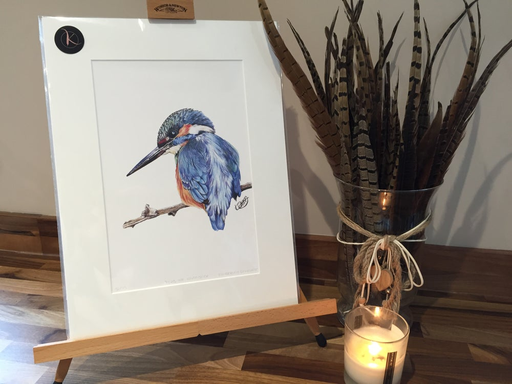 """Image of """"ELVIS THE KINGFISHER"""" LIMITED EDITION PRINT"""