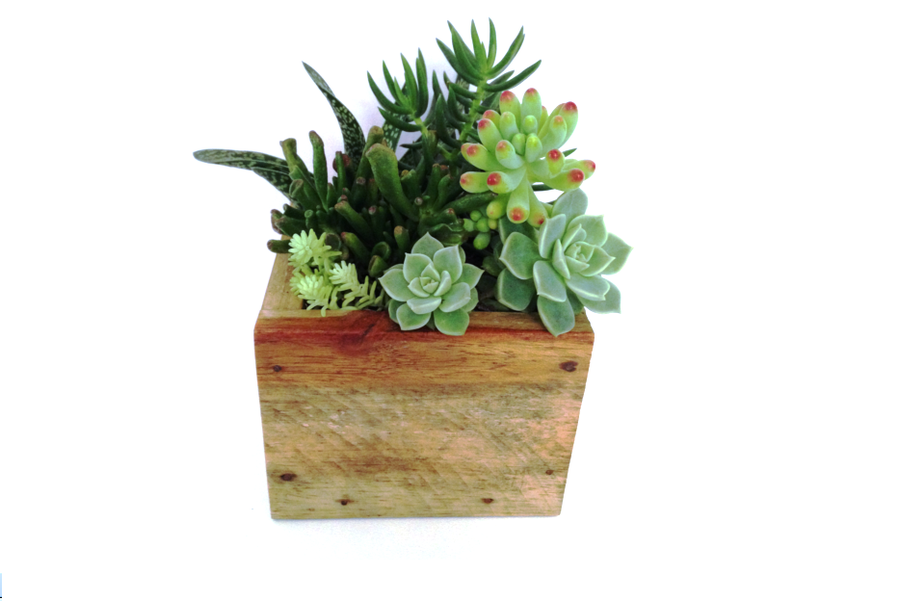 Image of Square Timber Boxer Planter