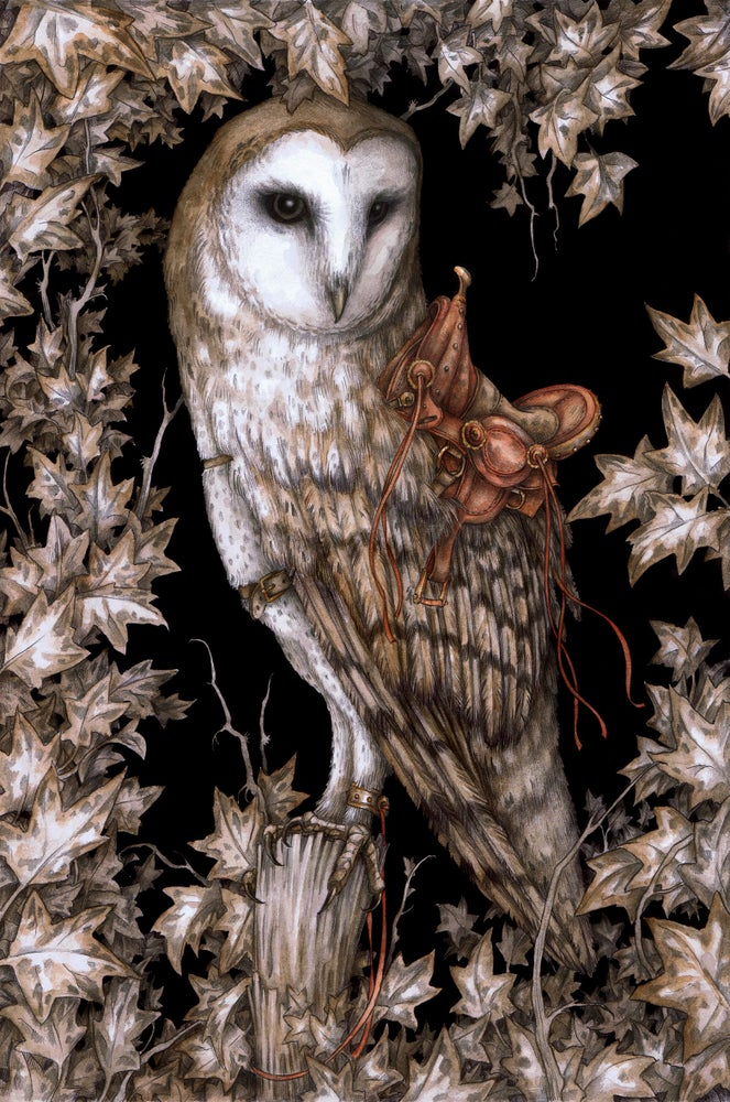 Image of 'The Saddled Barn Owl' by Adam Oehlers
